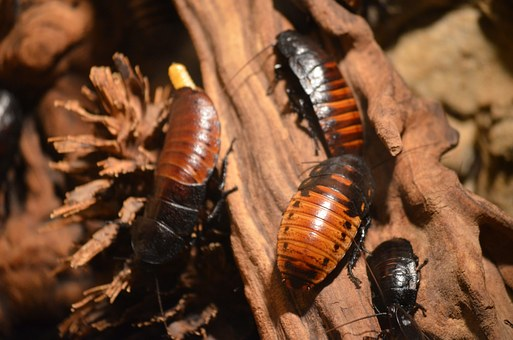 How To Manage Pests And Other Negative Critters