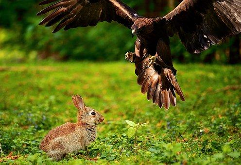 Standard Information Regarding Big Game Hunting and Deer Hunting