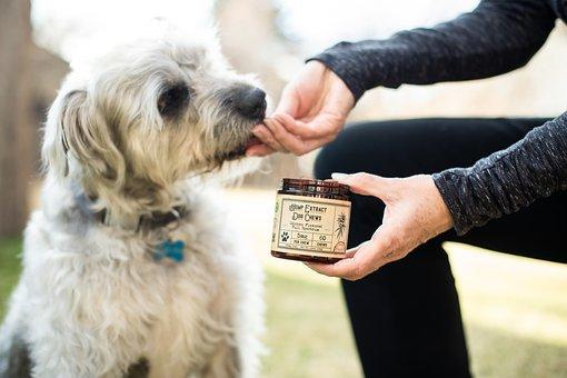 Cbd, Dog Treats, Dog Chews, Pet, Hemp
