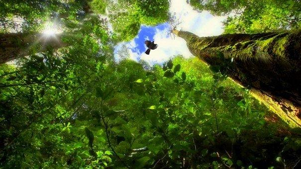 Trees, Forest, Birds, Vegetation, Green