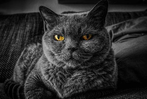 Cat, Cat'S Eyes, Gray Cat