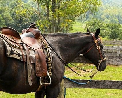 Horse, Western Saddle, Pomel, Horn