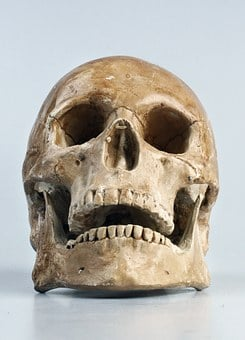 Skull, Color, Teeth, Skull, Skull, Skull