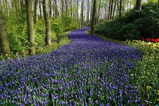 Flower, Forest, Meadow, Carpet, Path